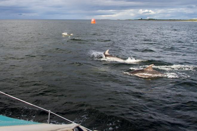 Vid Chanonry Point dök det upp några riktigt stora delfiner som följde oss ut genom sundet.