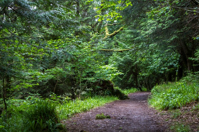 På promenad i naturreservatet Aros Park